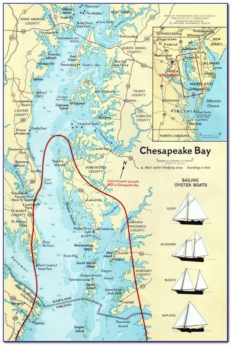 Chesapeake Bay Fishing Report June 2018