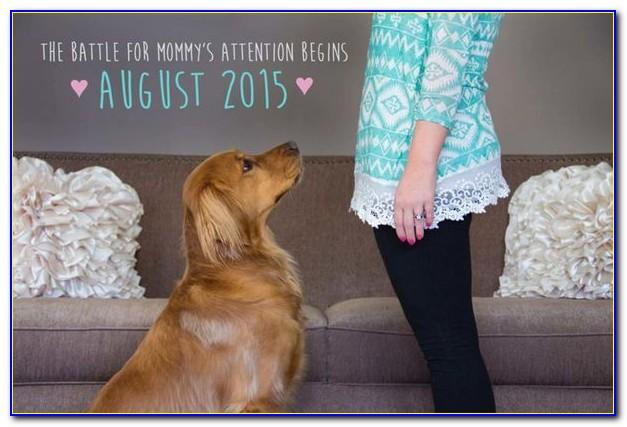 Pregnancy Announcement Captions With Dog