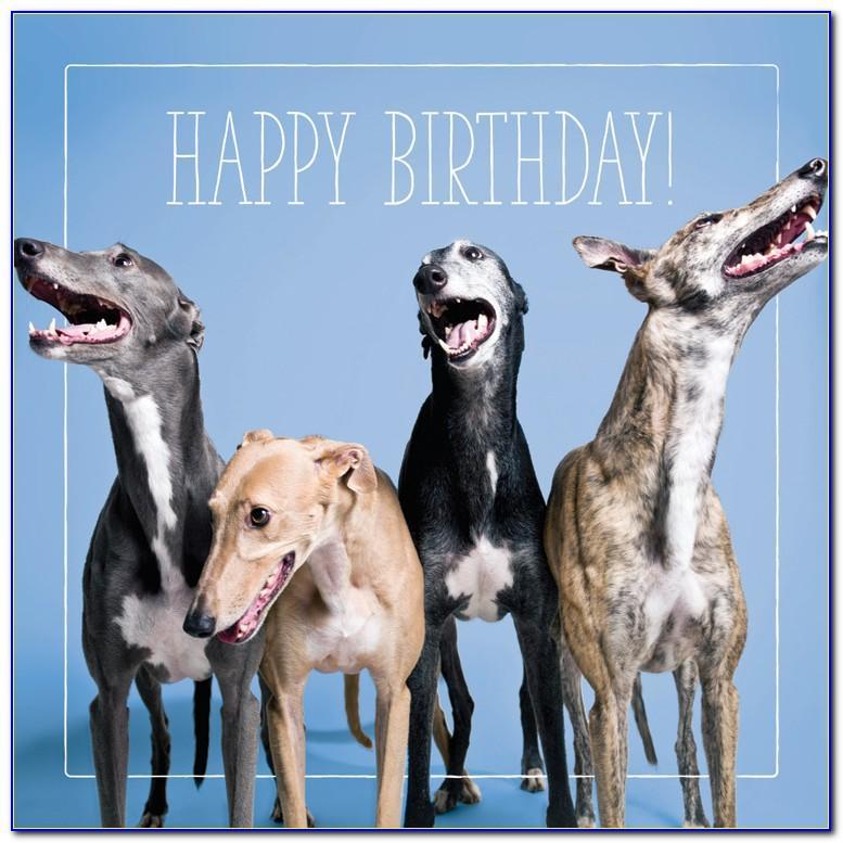 Greyhound Birthday Cards Uk