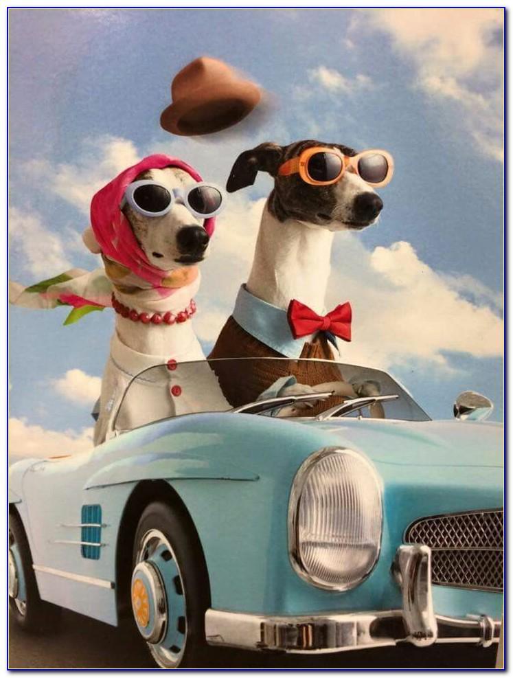 Greyhound Happy Birthday Card
