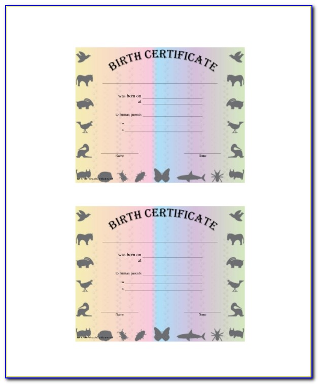 Scuba Certification Chicago