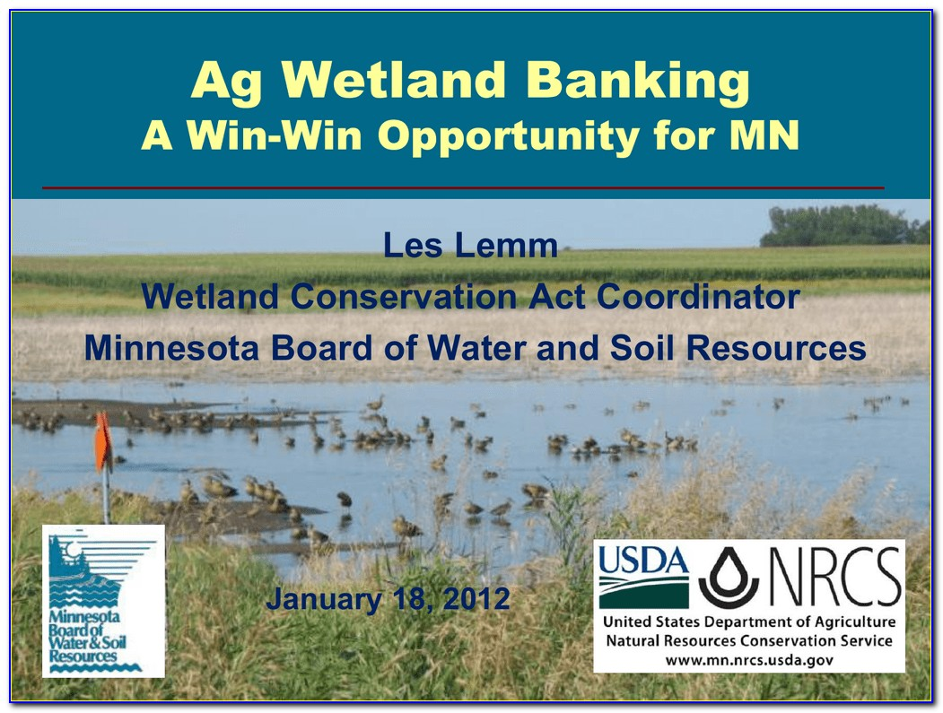 Wetland Delineation Certification Florida